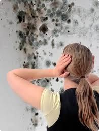 mold removal Lomita